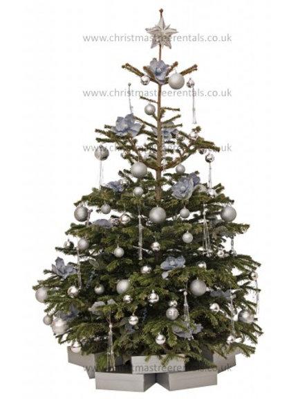 SAPPHIRE HAZE REAL TREE