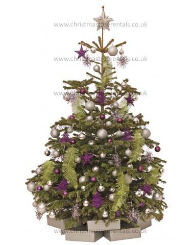 Real Trees Uk Christmas Tree Rentals