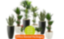 Office Plant Prices and Packages