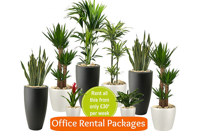 Office Rental Packages and Prices