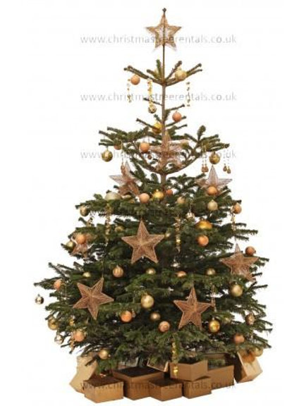 AMBER JEWEL REAL TREE