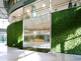 5 Reasons Your Office NEEDS a Living Wall