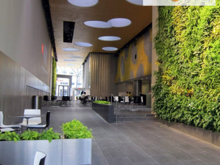 The Biophilic workplace - What Is It & How Can It Improve Your Office?