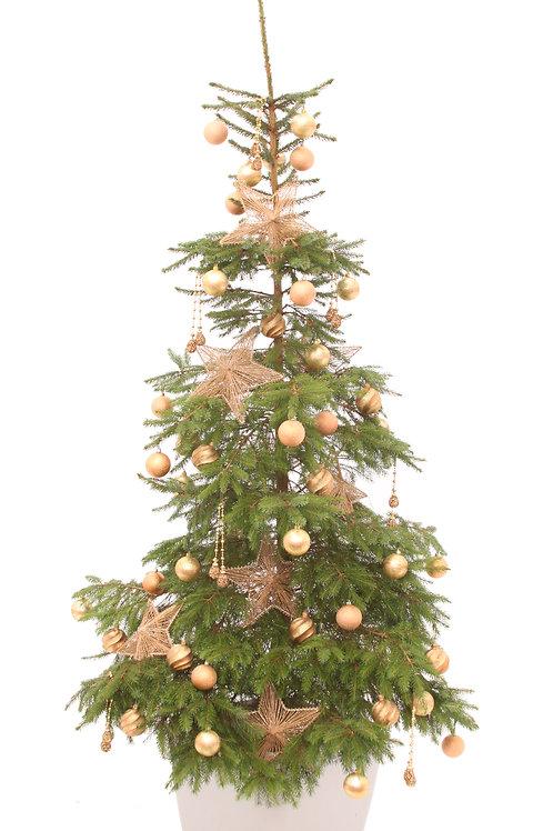 AMBER JEWEL ECO TREE