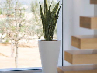 Missing the Christmas tree? Get an office plant!