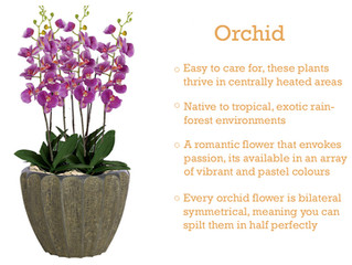 Plant of the Month - Orchid