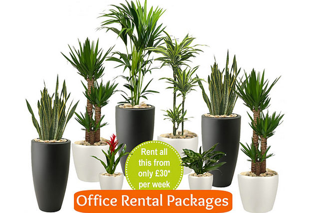Office Plants London Prices