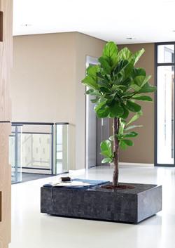 Furniture Planter Hybrids