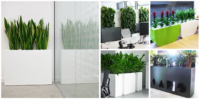 Office Plant Barriers and Screens