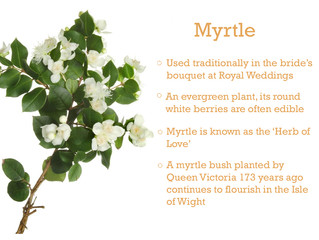 Plant of the Month - Myrtle