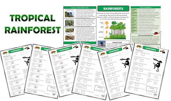 Rainforests - Knowledge Organiserand Mini-Quizzes