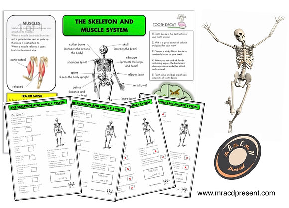 Skeleton and Muscles (Year 3) - Knowledge Organisers and Mini-Quizzes