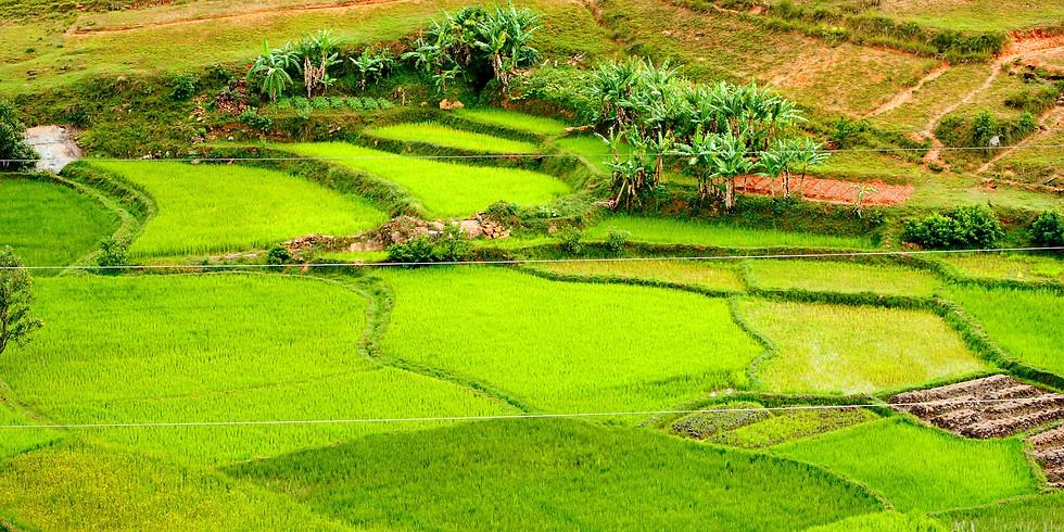 Effective partnership models to mobilize green finance                                 for agri-SME investment