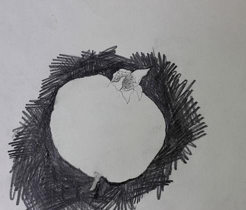Zeichnung Granatapfel