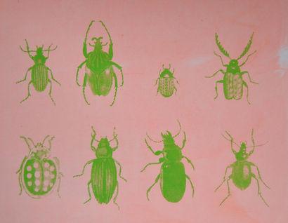 Käfertypologie