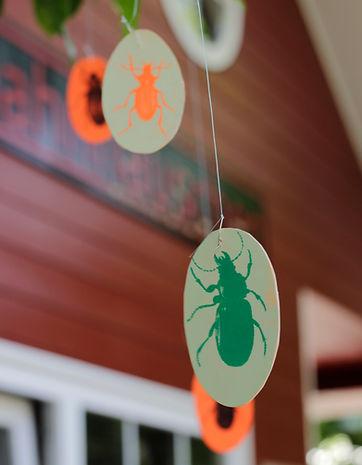 Installation Coleoptera