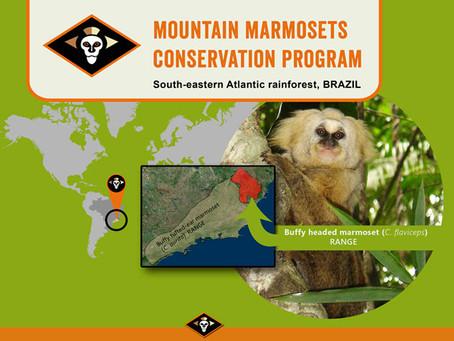 Endangered marmoset slipping towards extinction
