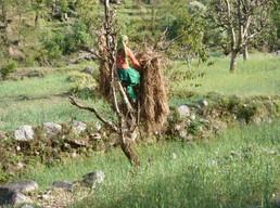 Everyday Himalayan life