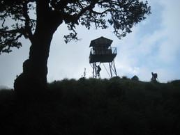 Wild Life watching