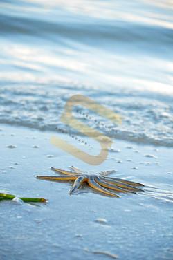 Travel- Fort Myers Beach
