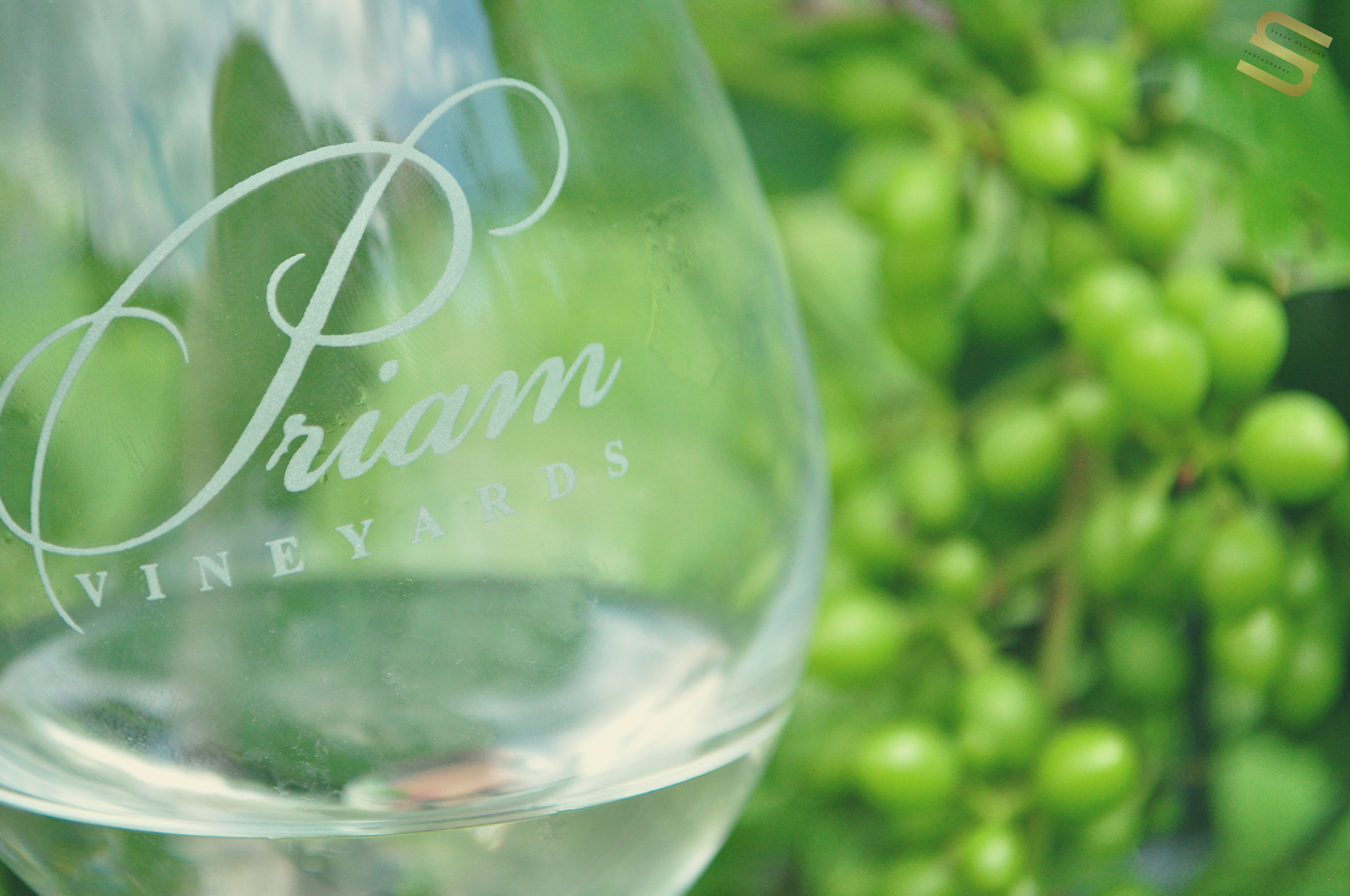Commercial- Priam Vineyards