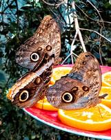 Marvin Makofsky_Lunch for Butterflies.jp