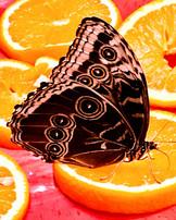 Marvin Makofsky_Lunch for Butterflies-2.