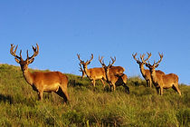 Hunting in uruguay caceria cazar