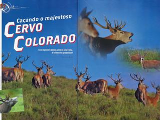 Caçando o majestoso Cervo Colorado