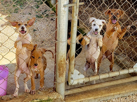Welcome to the Saipan Cares for Animals Blog!