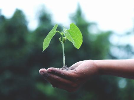 Seed sown