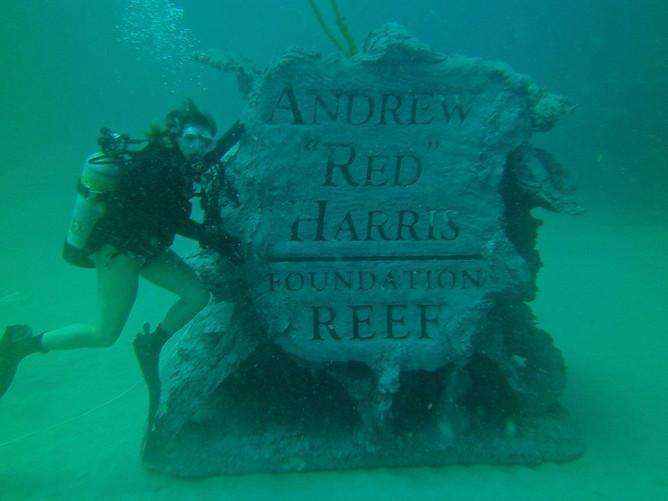 Andrew Harris Reef 12 - CXOART