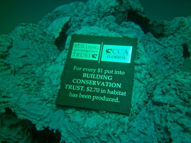 Andrew Harris Reef 7 - CXOART