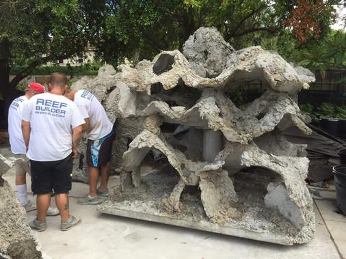 Andrew Harris Reef 3 - CXOART