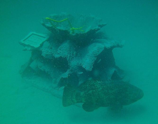Andrew Harris Reef 9 - CXOART