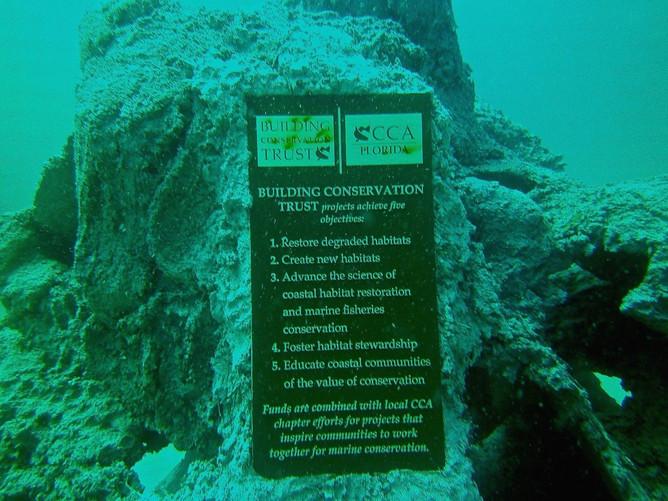 Andrew Harris Reef 8 - CXOART
