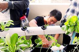 6_Kebun-Percobaan-Hidroponik.jpg