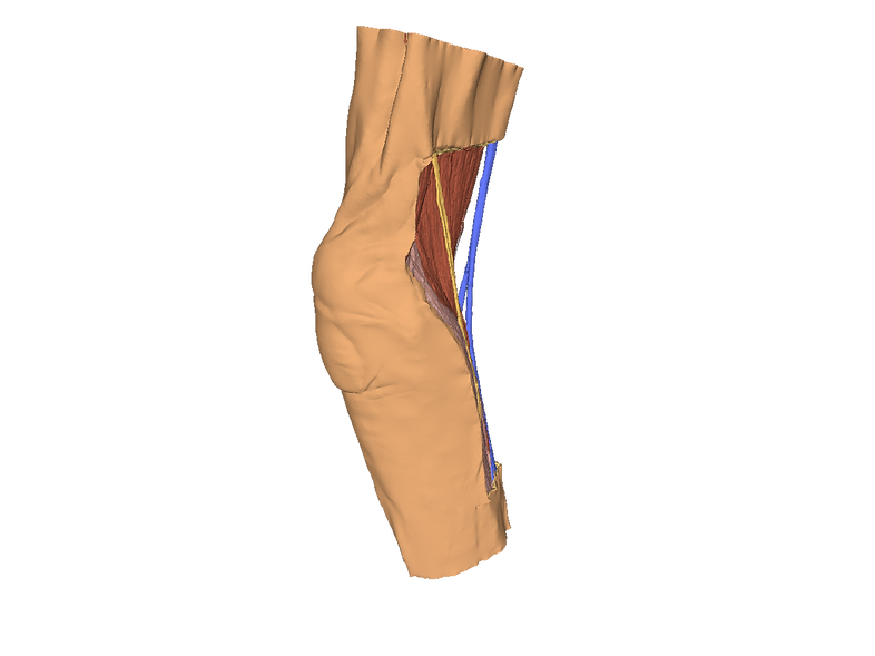 3D Anatomy Series   Cubital Fossa