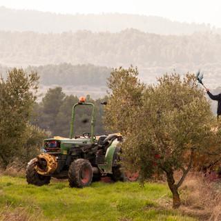 collir olives.jpg