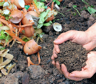 compost-portada (2).jpg