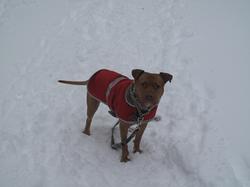best-dogwalkers-brooklyn-nyc_godog
