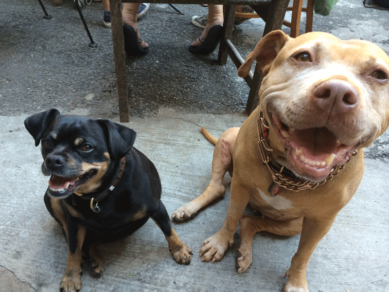 brooklyn-dogwalkers-professional-dogcare