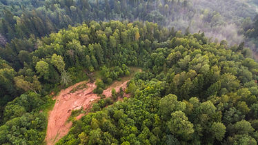 Foto aérea de un bosque