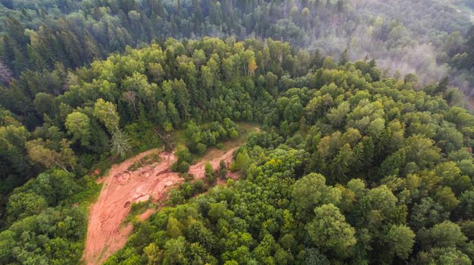 Luftbild von einem Wald