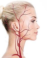 img-blood-vessels.jpg