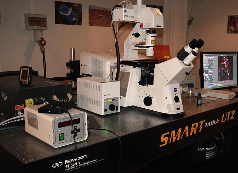 Microscopio Confocal 710 con módulo bi-fotónico
