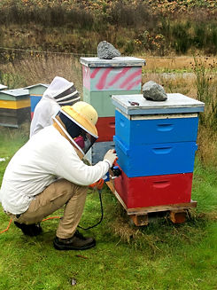 A beekeeper student, treating a beehive.