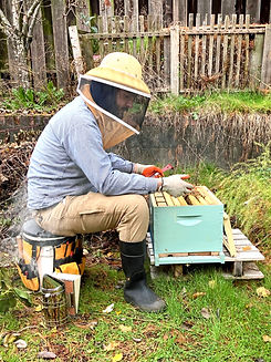 A beekeeper student, pulling a framen out of a hive.