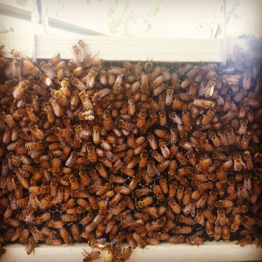 The Bees have arrived!!!