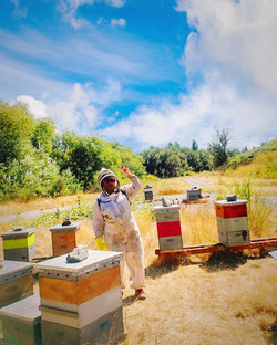 In the Field with Bees